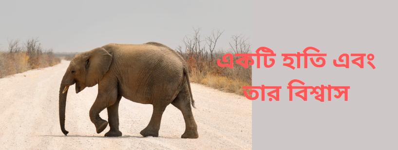 elephants belief-julfiker